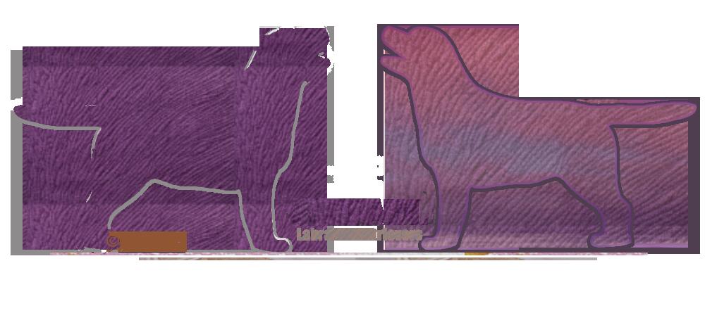 JaxwiL
